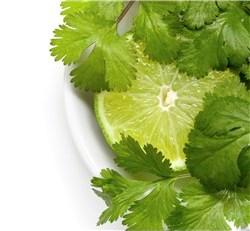 Lime and cilantro or coriander in small white bowl.