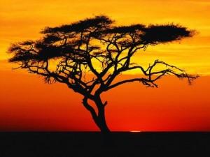 african-safari-candle