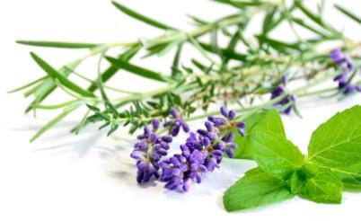 Lavender-herbs