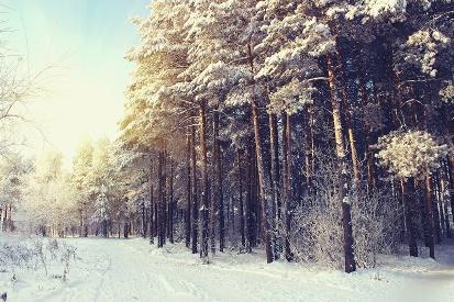 Winter wonderland 1 candle