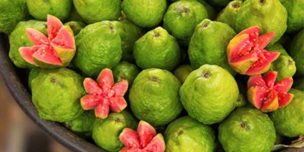 Guava Wax Melt Review