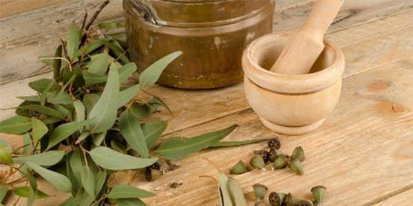 Mint Eucalyptus Candle Review