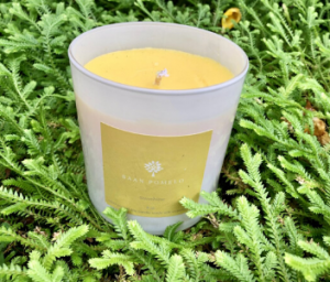 Baan Pomelo Soy Candle Brand Sunshine Candle