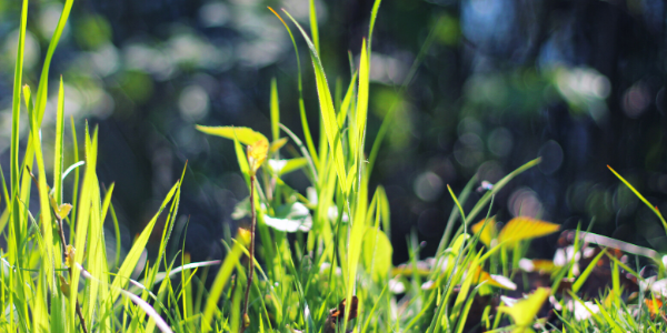Blades of Grass in Sunlight