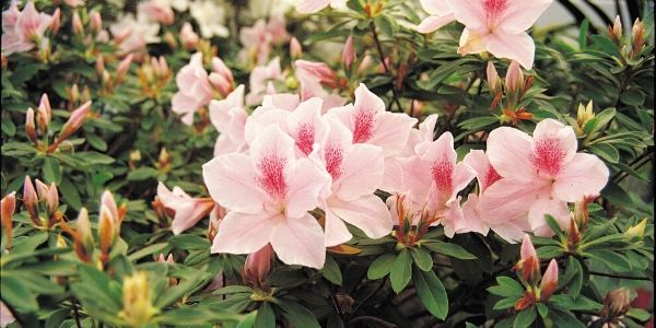 pink wildflowers in bloom