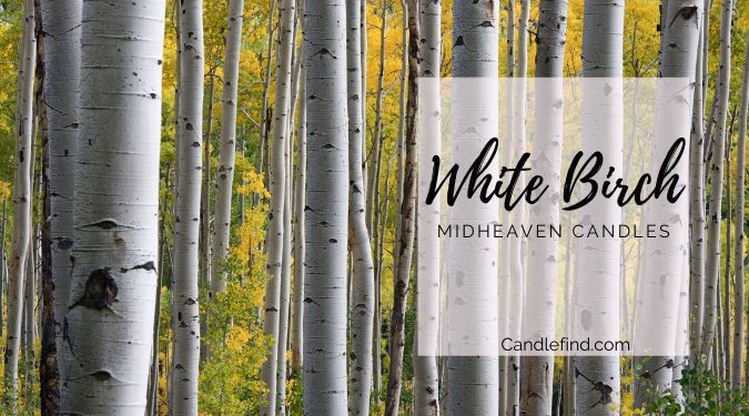 White Birch trees in forest White Birch candle review midheaven candles