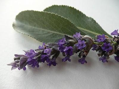 Picture credit - Illuminatedperfume.com