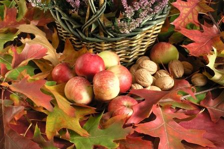 Apples and Oak