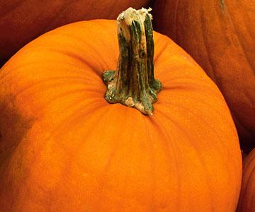 Close up pumpkin