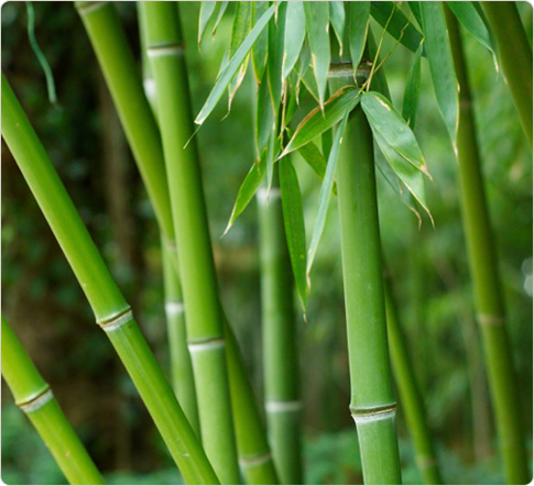 Bamboo Grass scented melt review